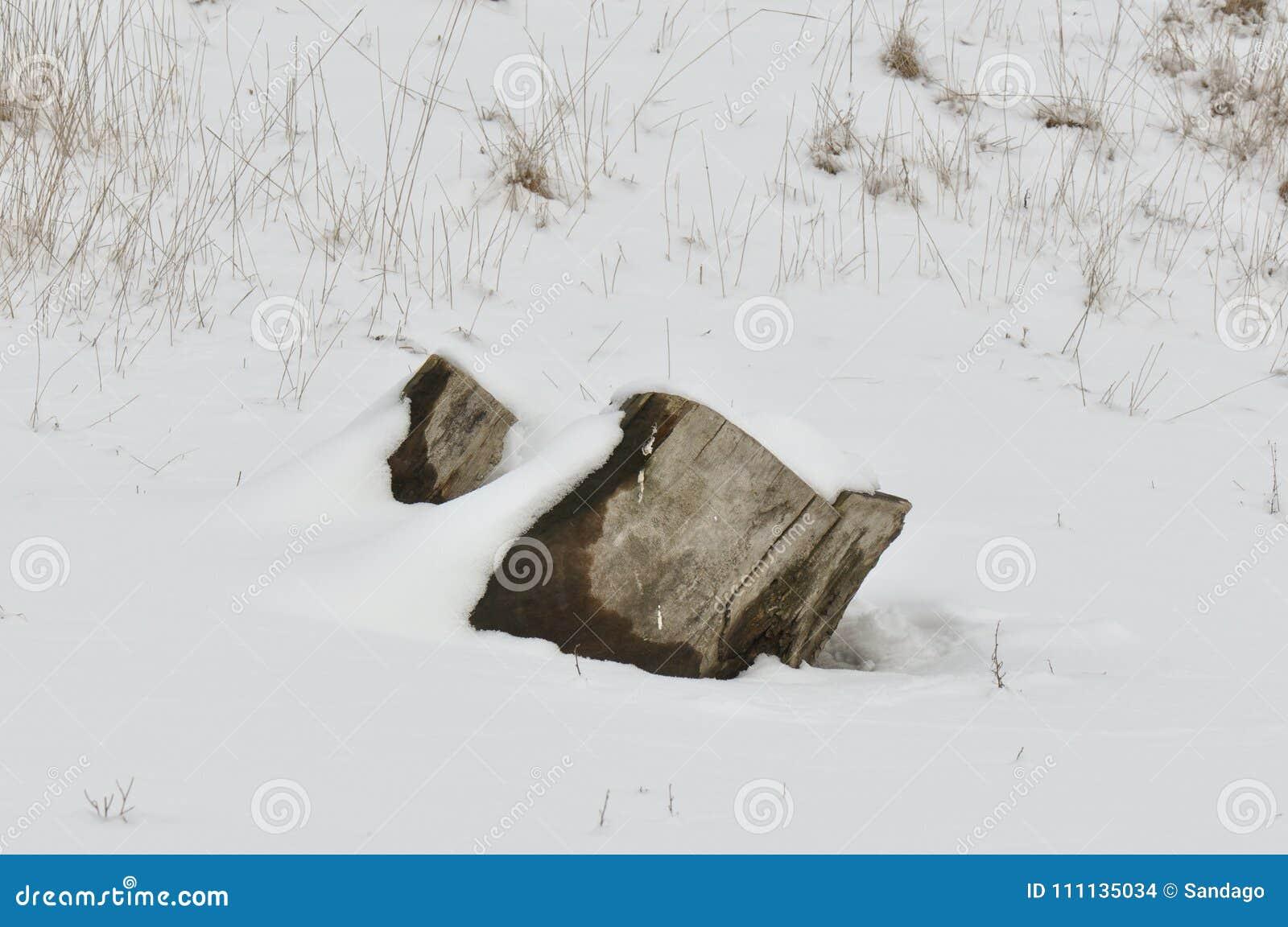 Groot die boomlogboek met sneeuw wordt behandeld