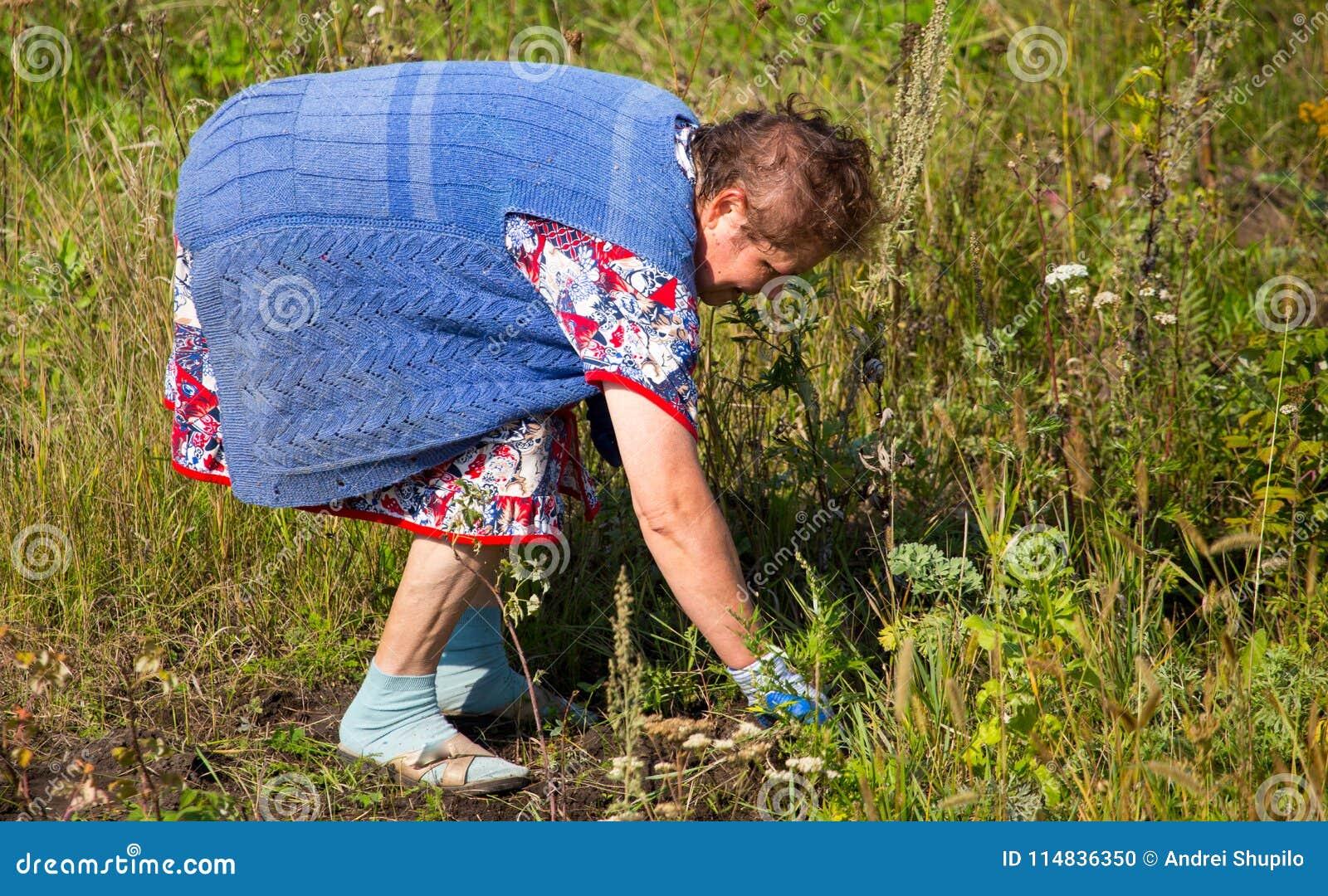 Grootmoederscheuren van het gras in de tuin