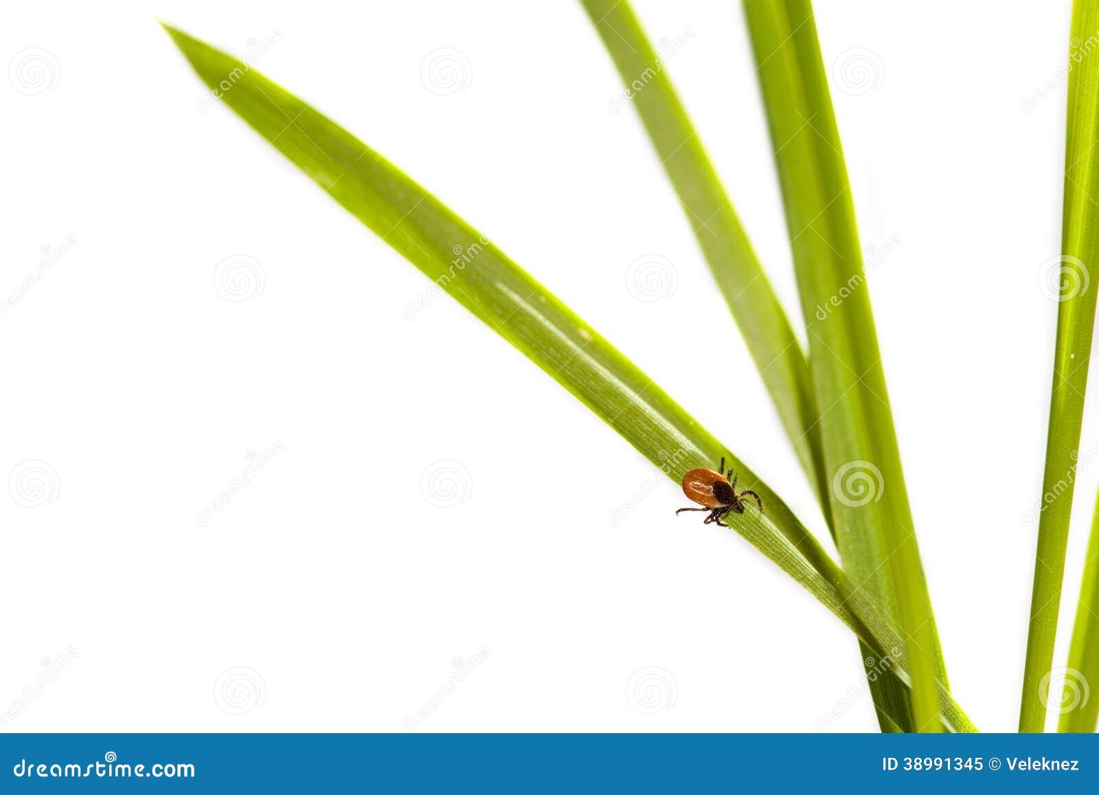 Gros coutil sur une feuille verte.
