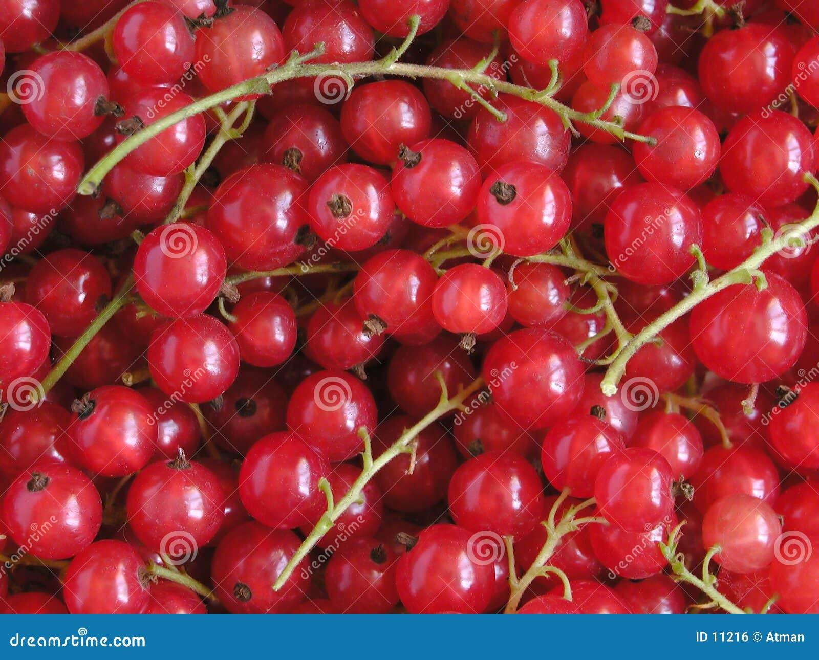 Groseille rouge