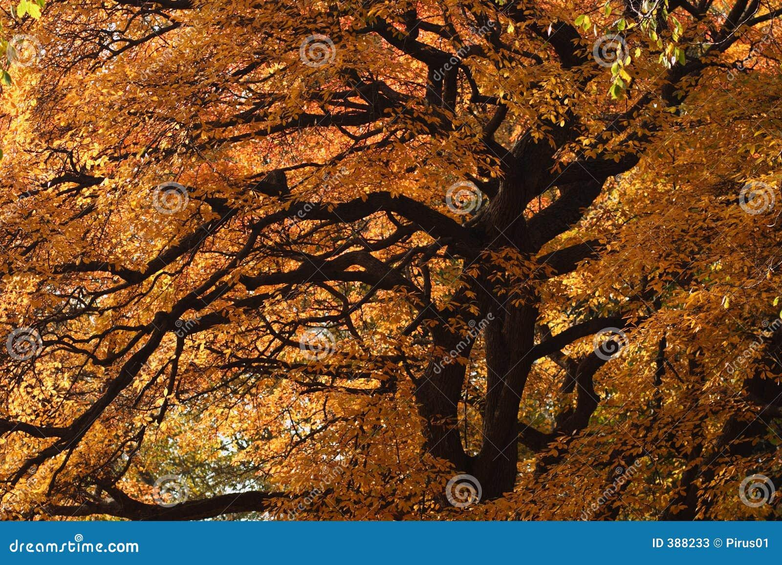 Grote boom met dalingskleuren