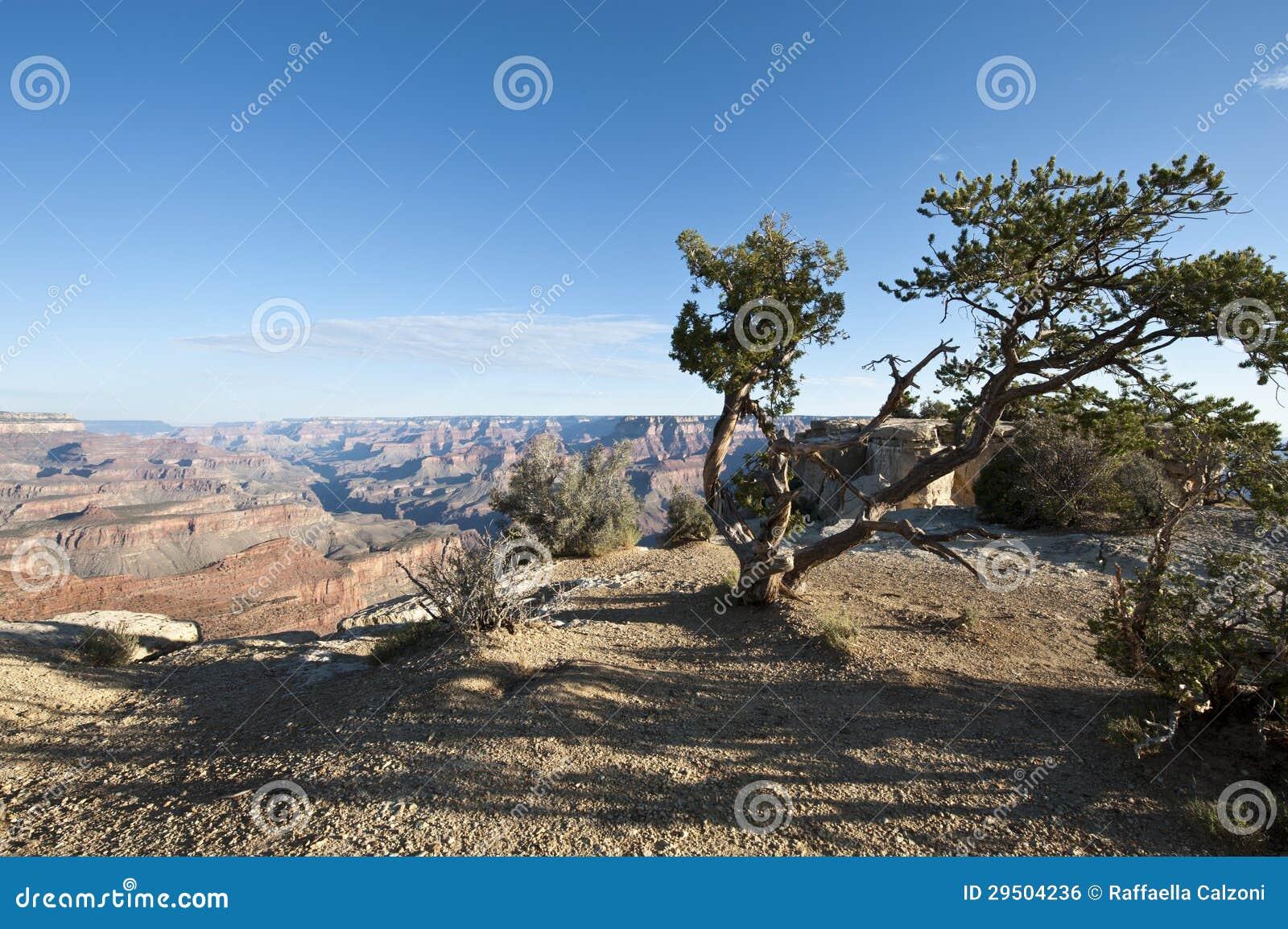 Grote Canion, Amerika