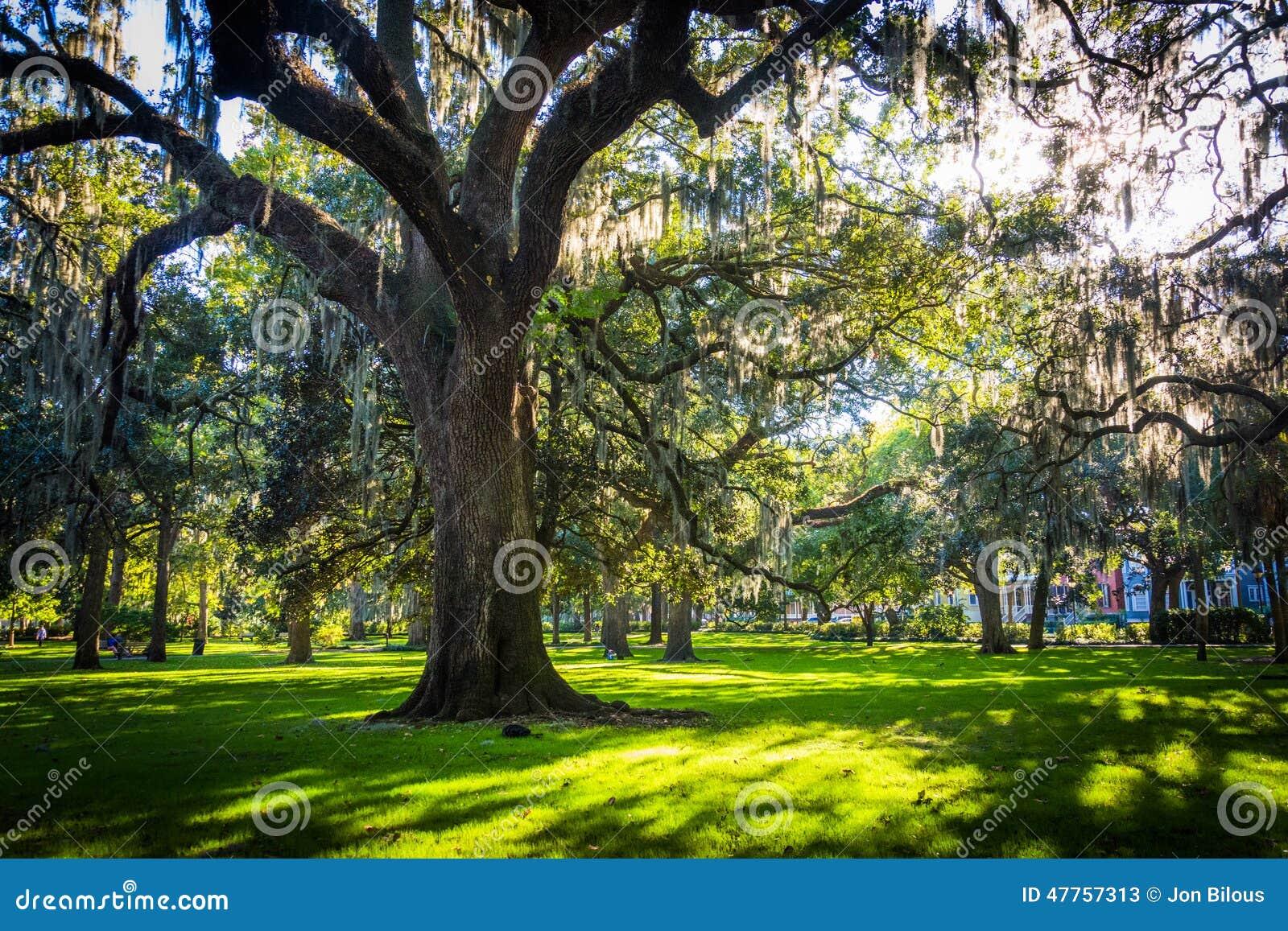 Grote eiken bomen en Spaans mos in Forsyth-Park, Savanne, Geor