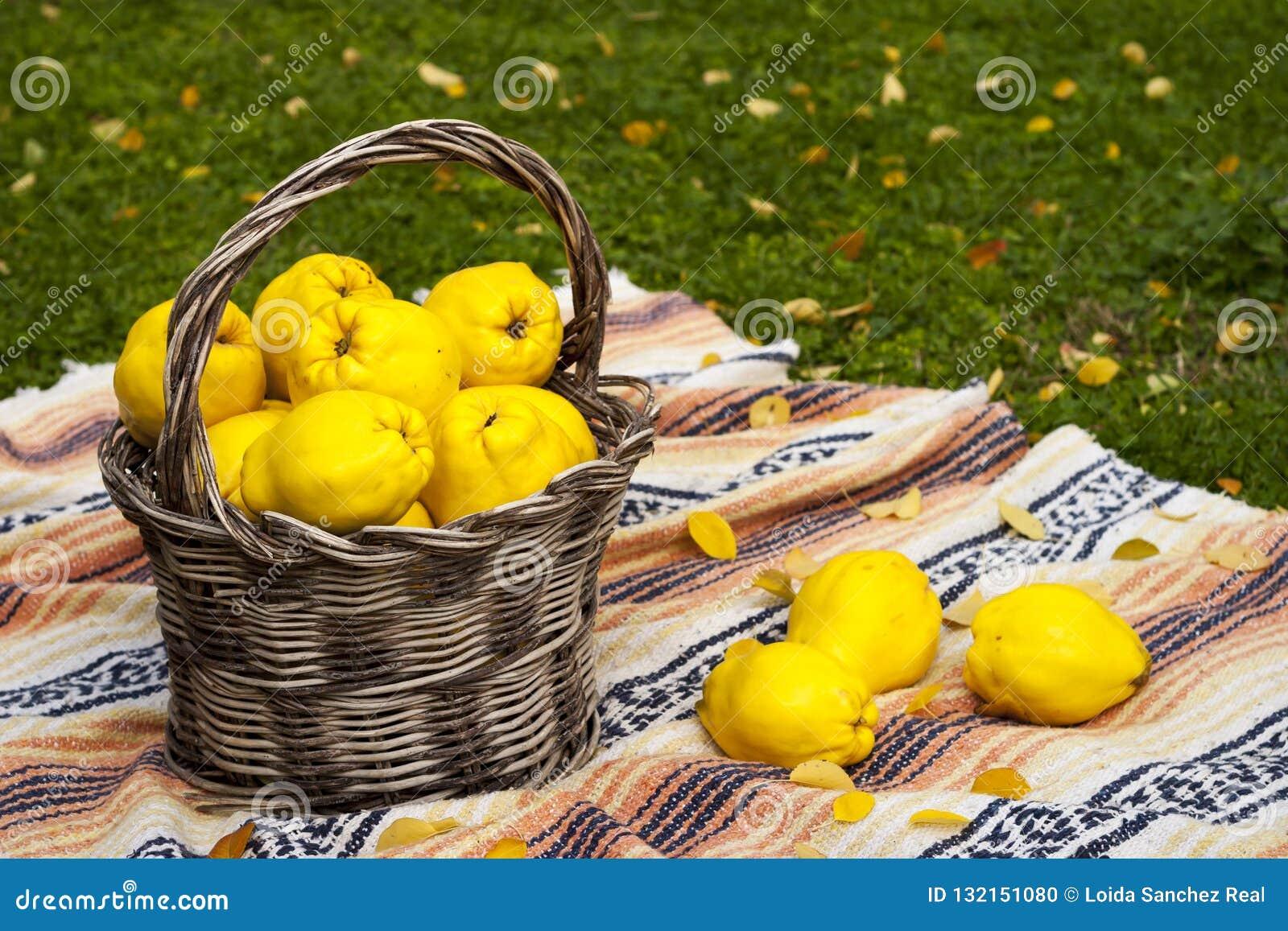 Grote en gele kweeperen in een mand