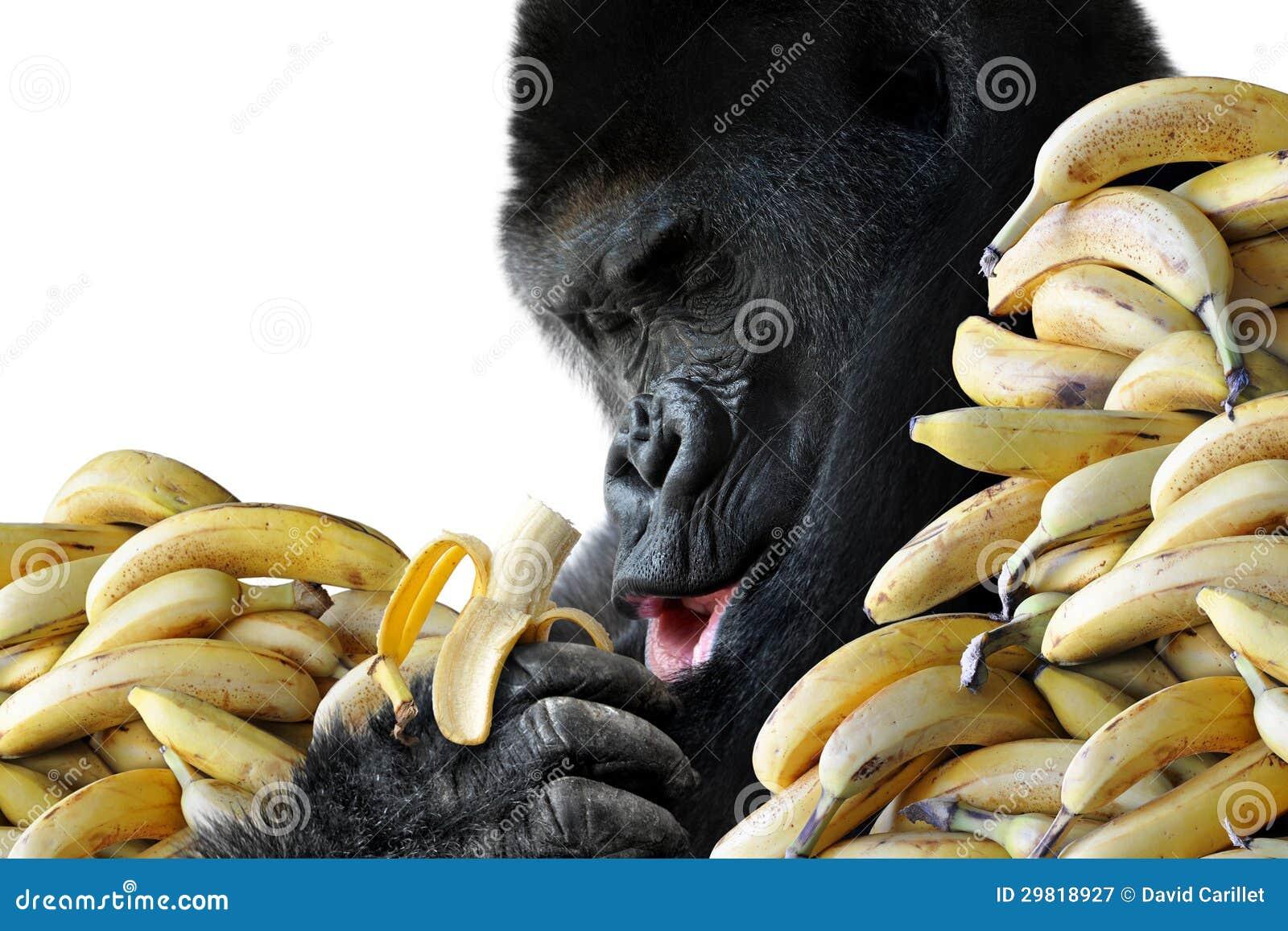 Grote hongerige gorilla die een gezonde snack van bananen voor ontbijt eten royalty vrije stock - Snack eten ...