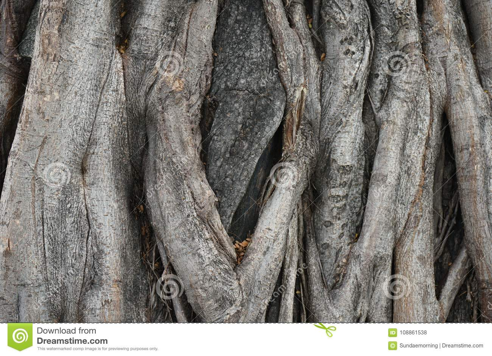 Grote houten de textuurachtergrond van de boomschors