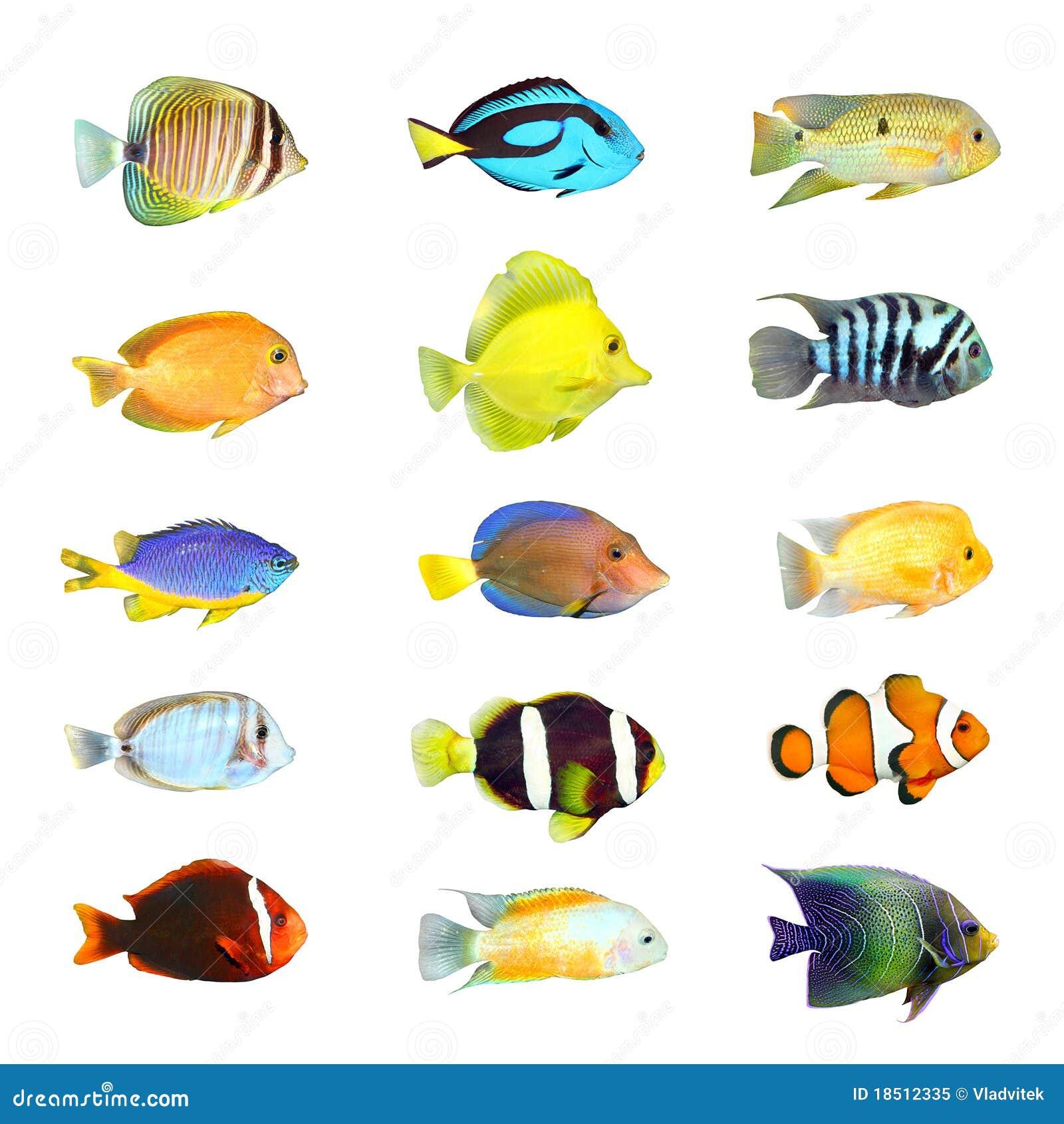 Grote inzameling van een tropische vis.