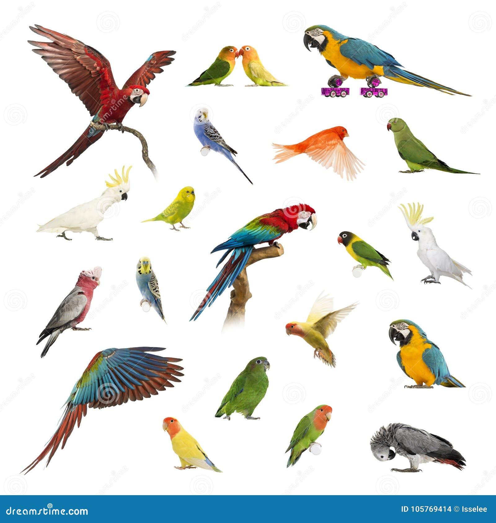 Grote inzameling van vogel, huisdier en exotisch, in verschillende positie