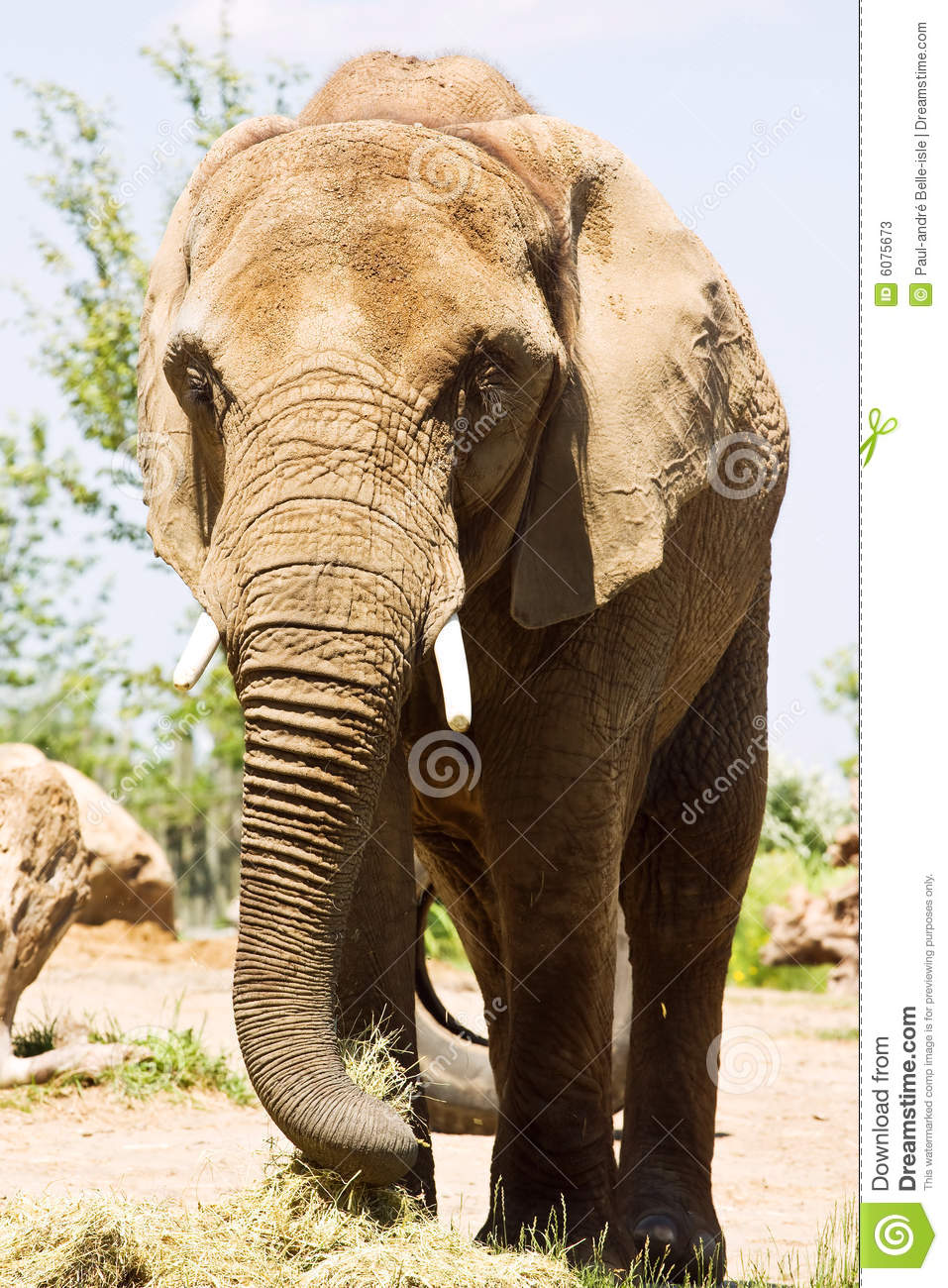 Grote Olifant