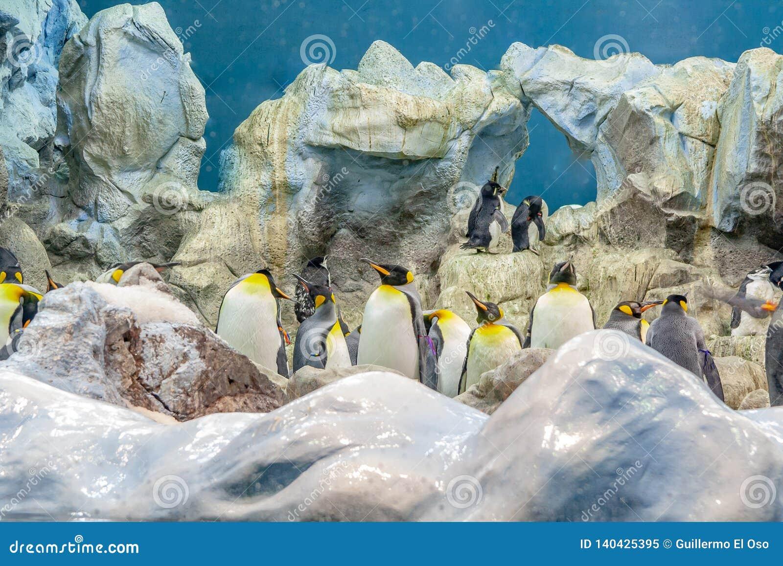 Grote Pinguïn bij de dierentuin in Spanje