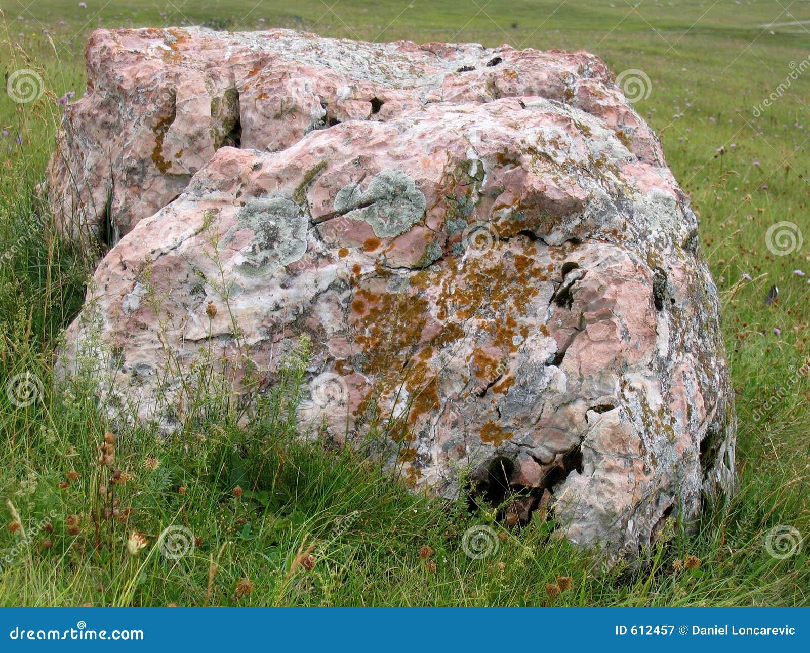 Grote rots bij het gebied
