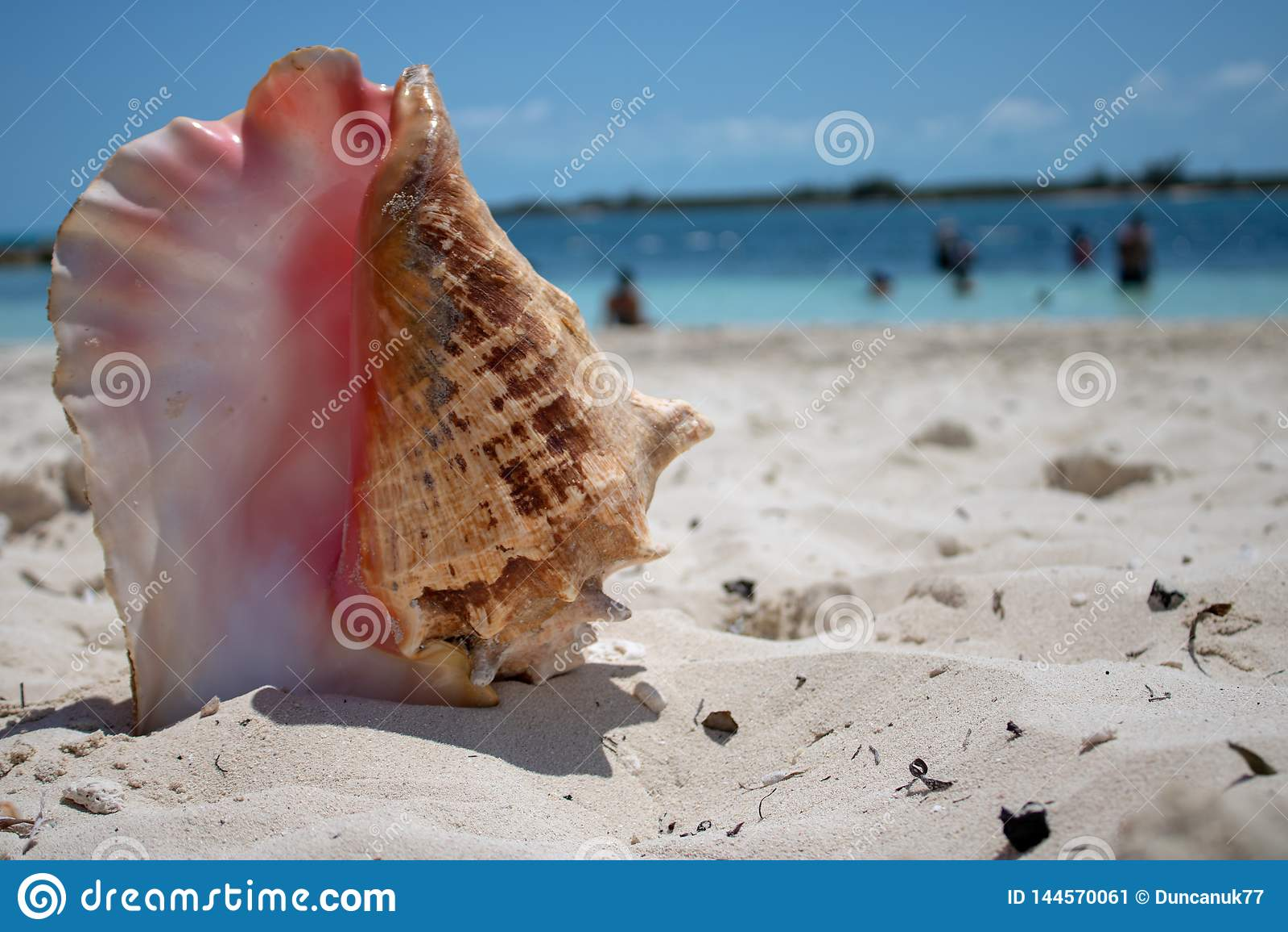 Grote shell op een tropisch strand