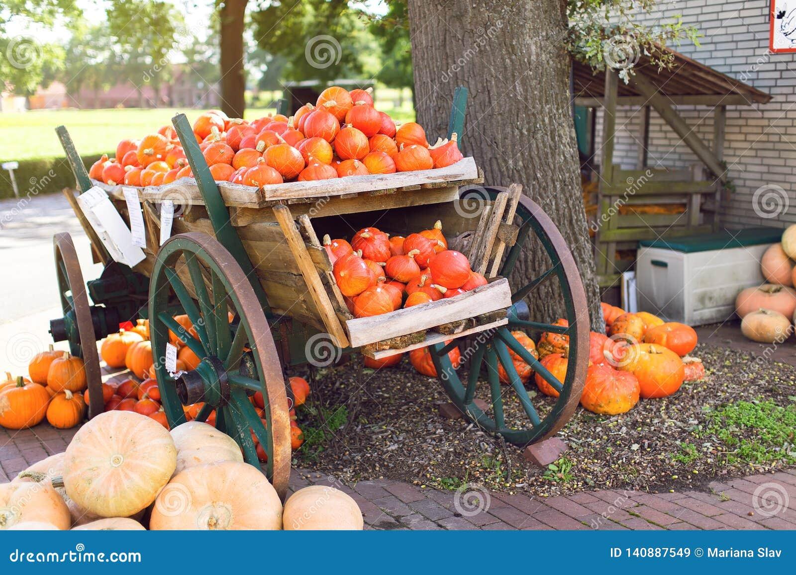 Grote stapel van pompoenen in een houten kar