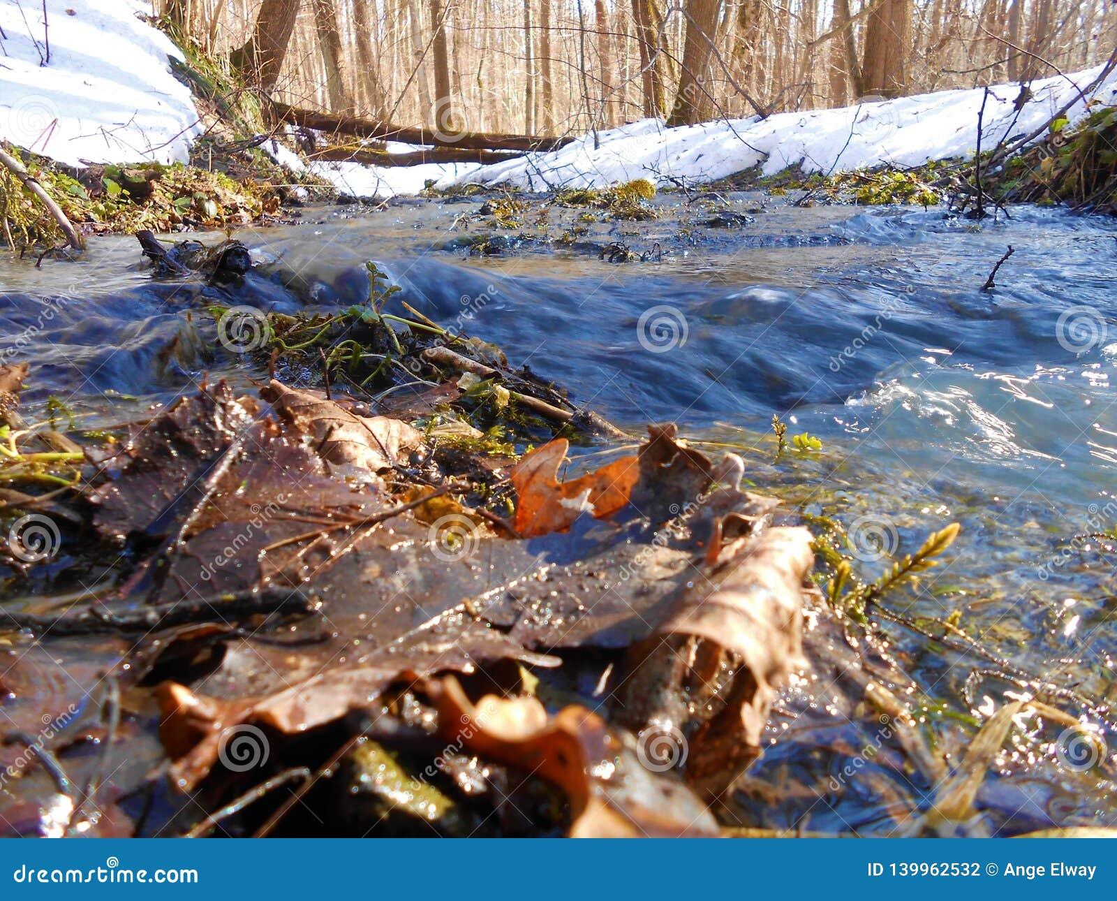Grote stroom in het bos
