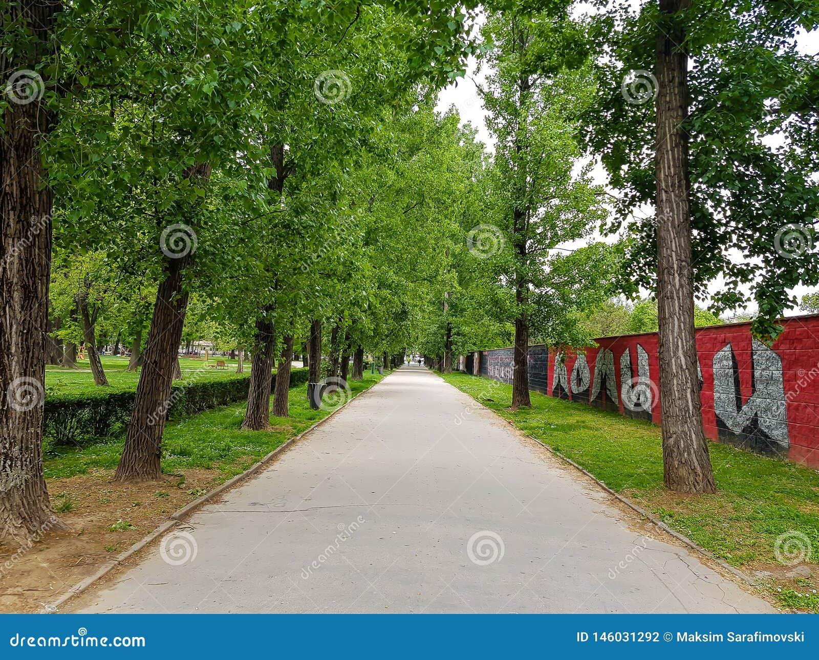 Grote weg door rij van bomen in stadspark
