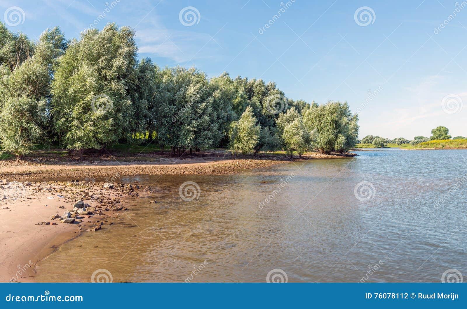 Grote wilgen op de bank van een meer