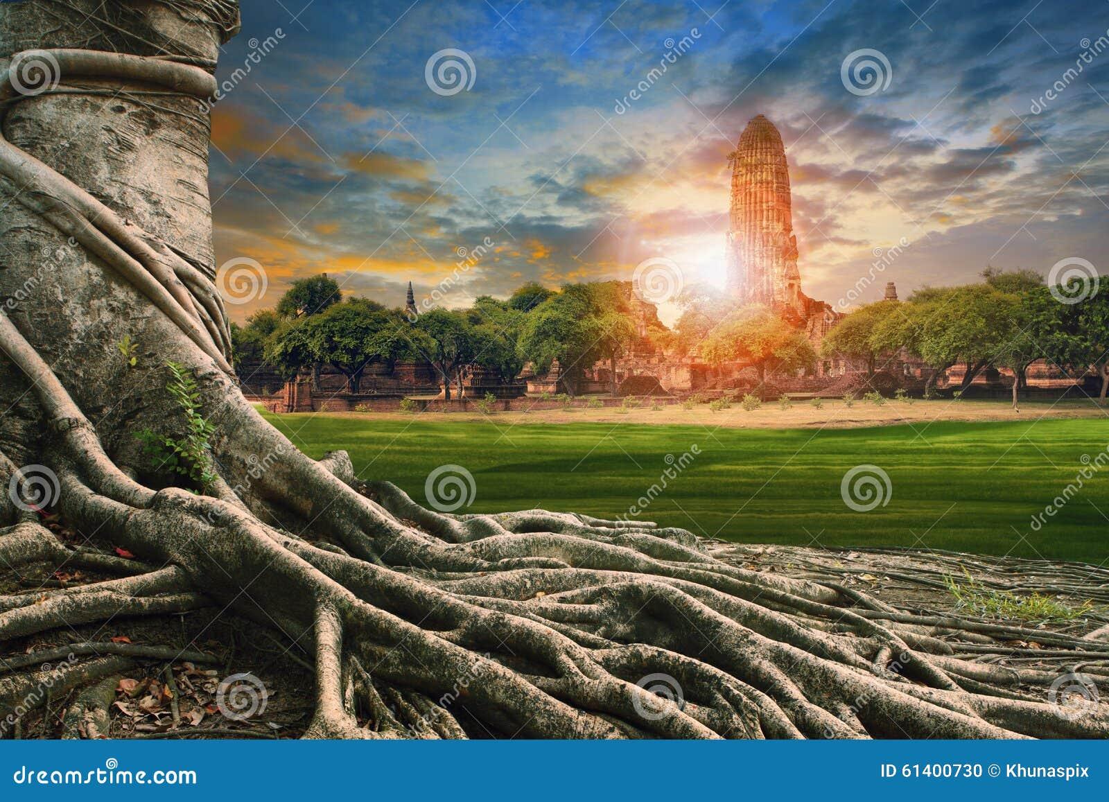 Grote wortel van banyan boomland scape van oude en oude pagode binnen
