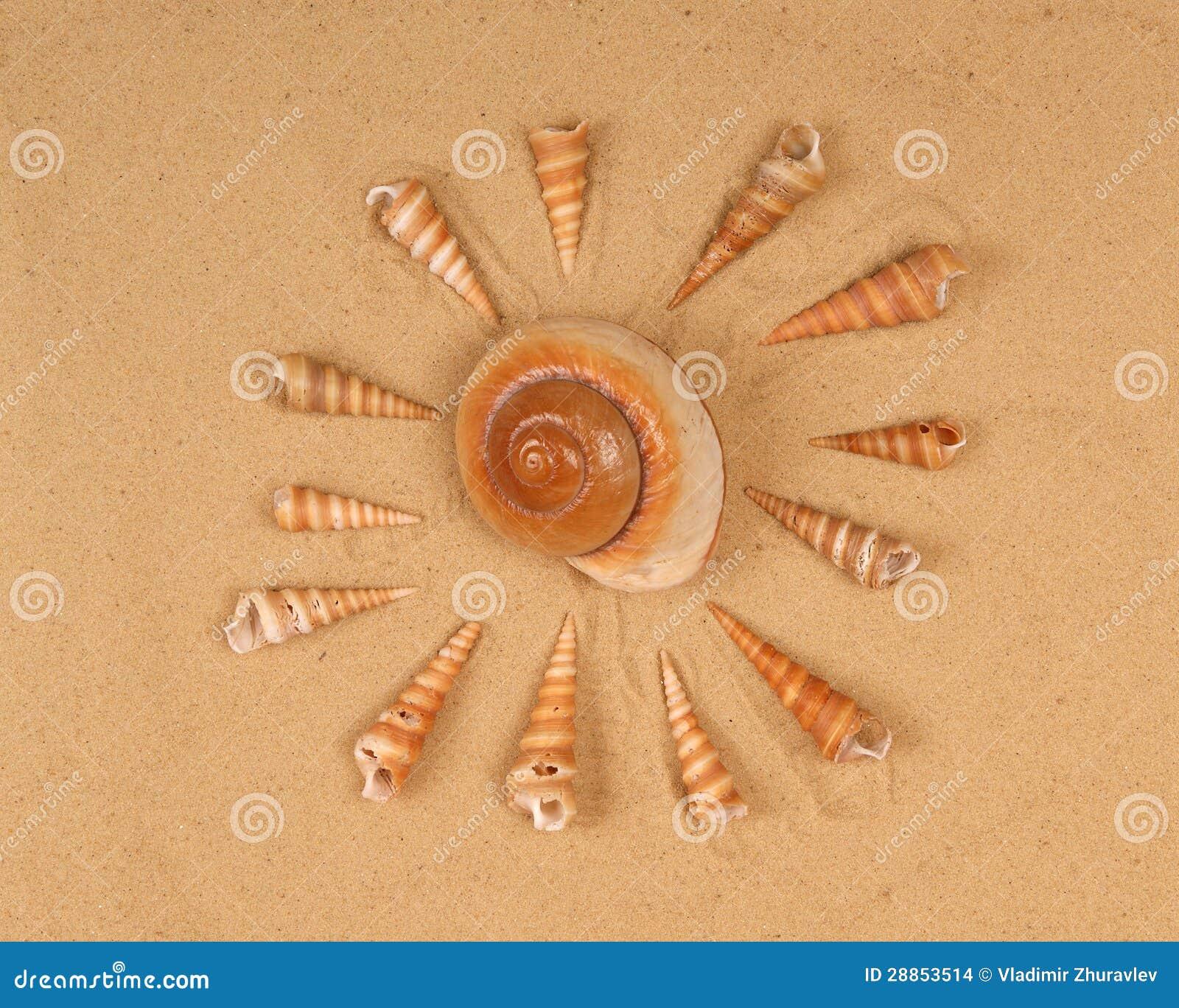 Grote zeeschelpen op het zand