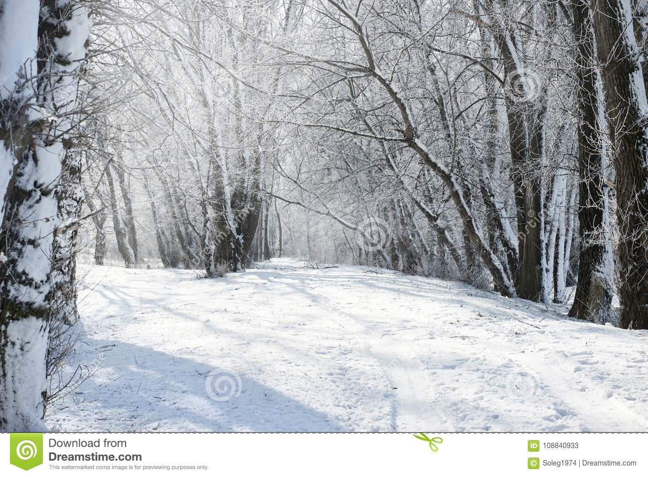 Ground road in winter forest, beautiful wild landscape with snow and blue sky, nature concept