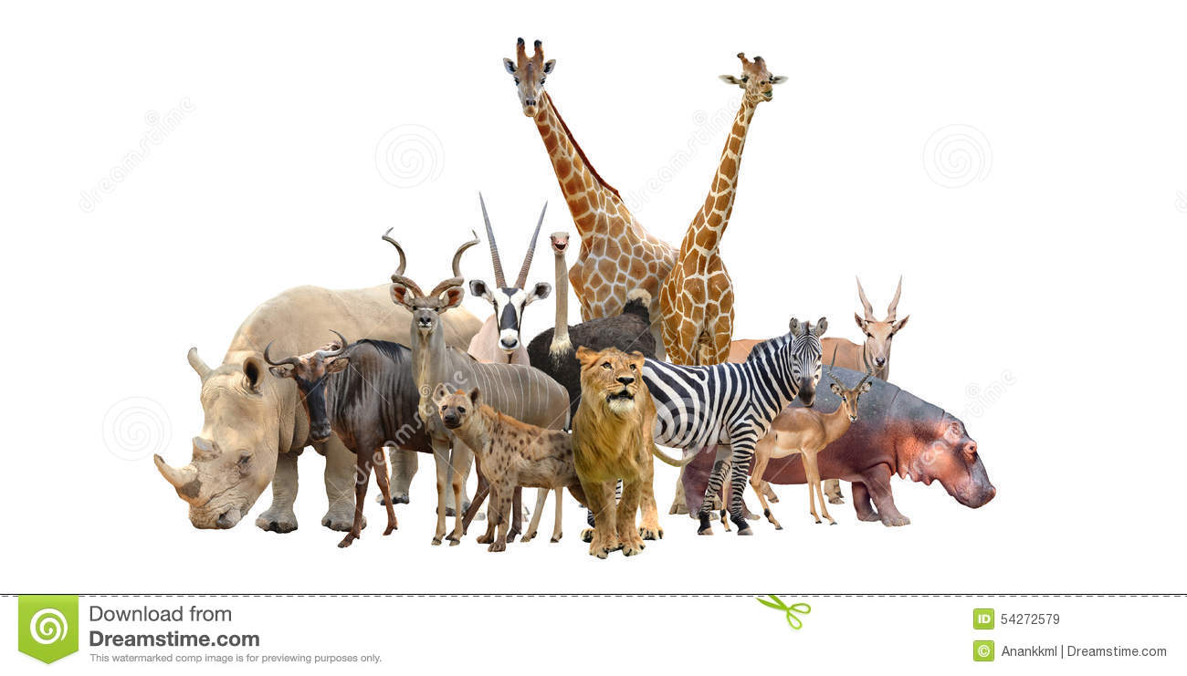 Group of wild animals together - photo#20