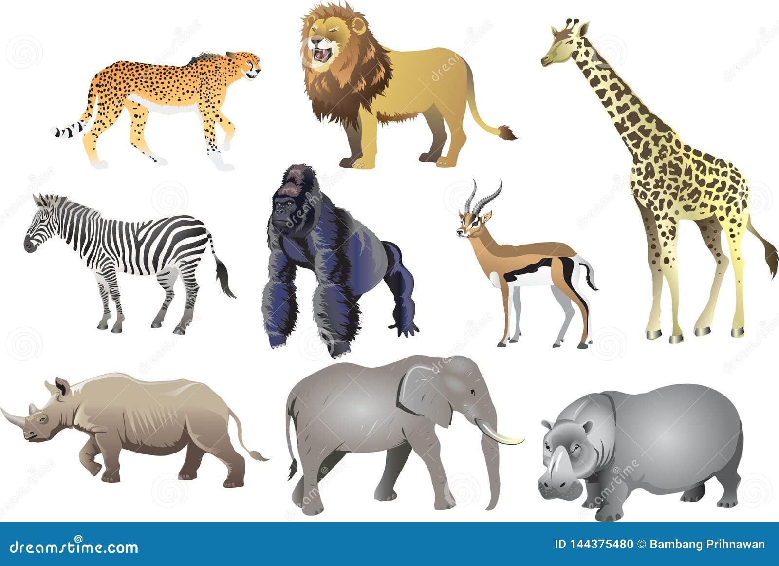 Group Of African Animal Wild Life , Cheetah, Lion, Giraffe, Zebra, Gorilla, Antelope, Rhino, Elephant, Hippopotamus - Vector Illus