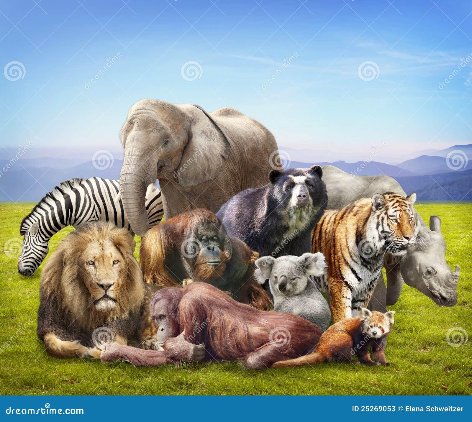 Group of animals stock image Image of mammals panda