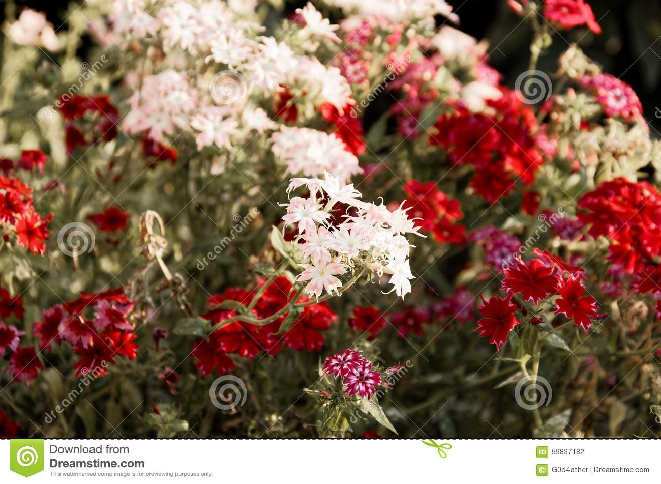 Group of annual flowers stock photo image of garden 59837182 group of annual flowers izmirmasajfo