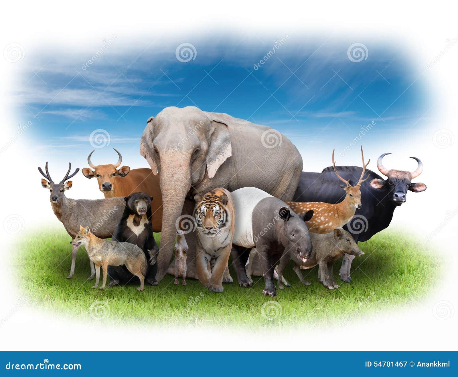 Group Of Asia Animals Stock Photo - Image: 54701467