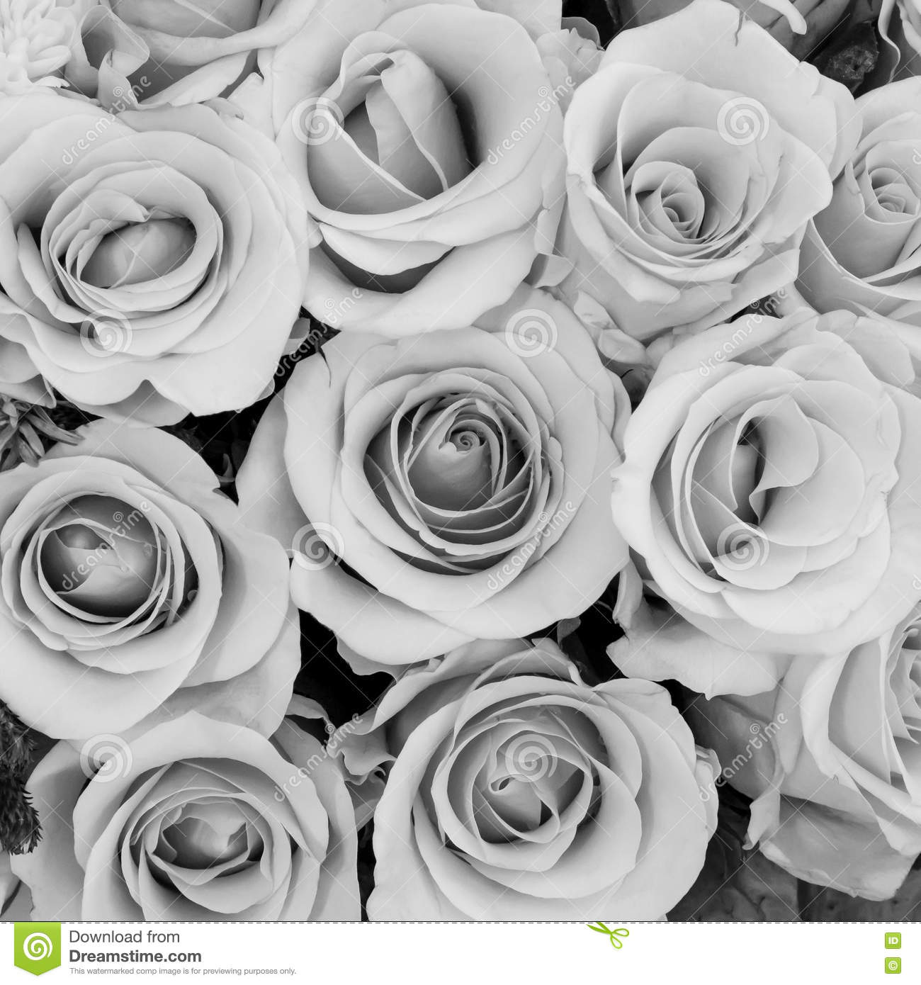 The Group Of Beautiful Roses Flower In Black And White Tone