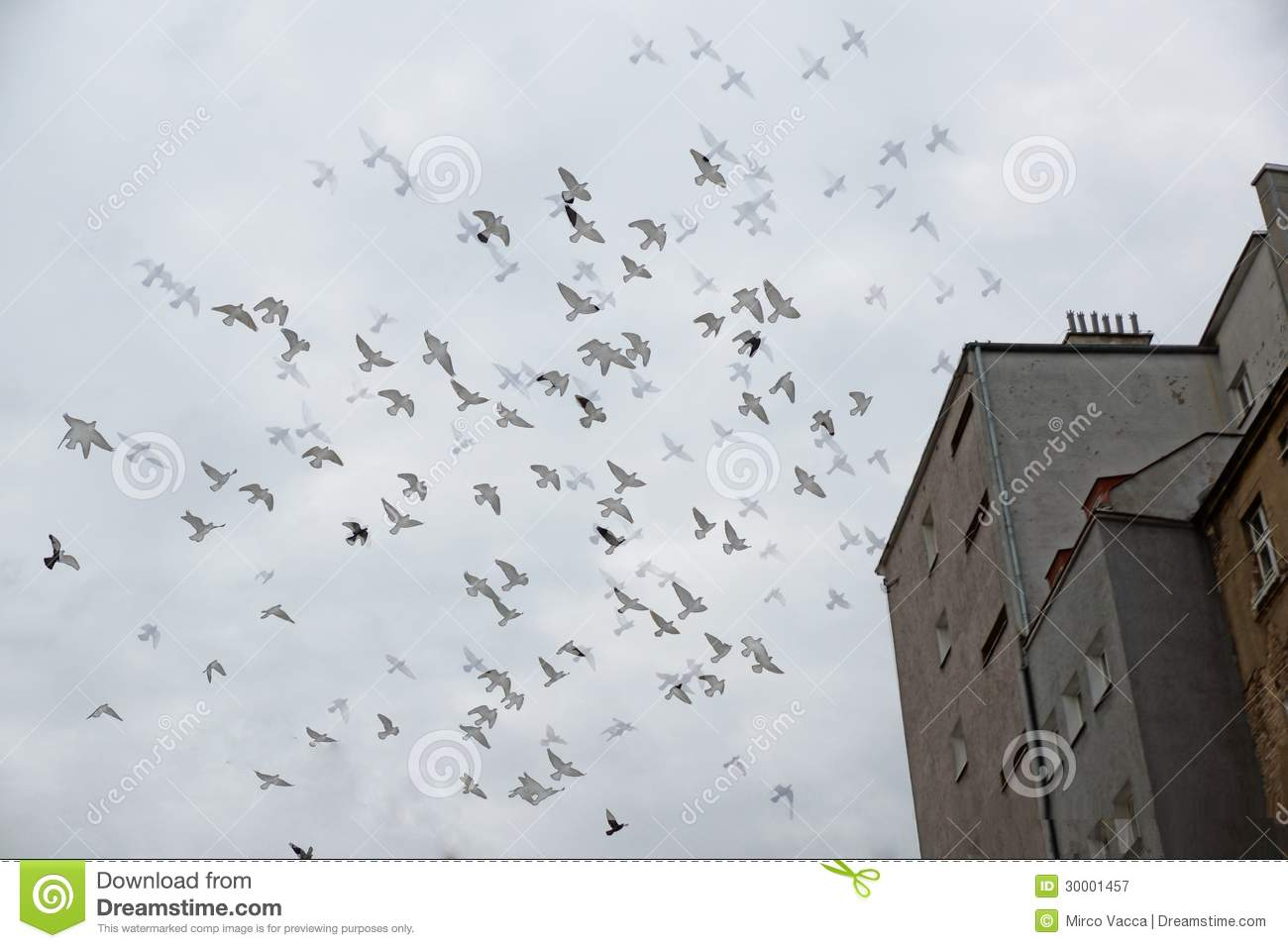 Royalty Free Stock Photography Group Birds Flying Over Building Image3...