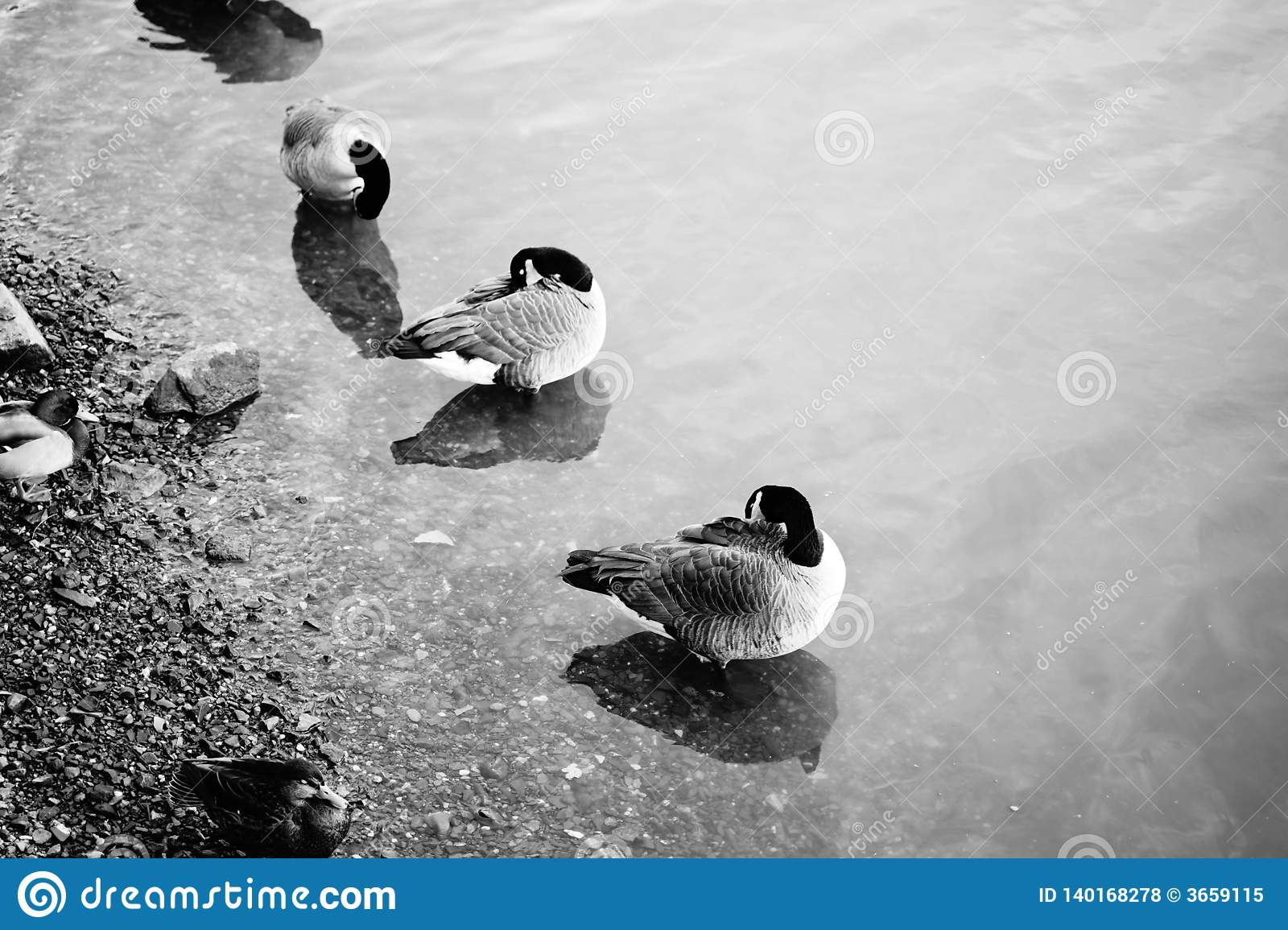 Group of birds sitting in water on the beach