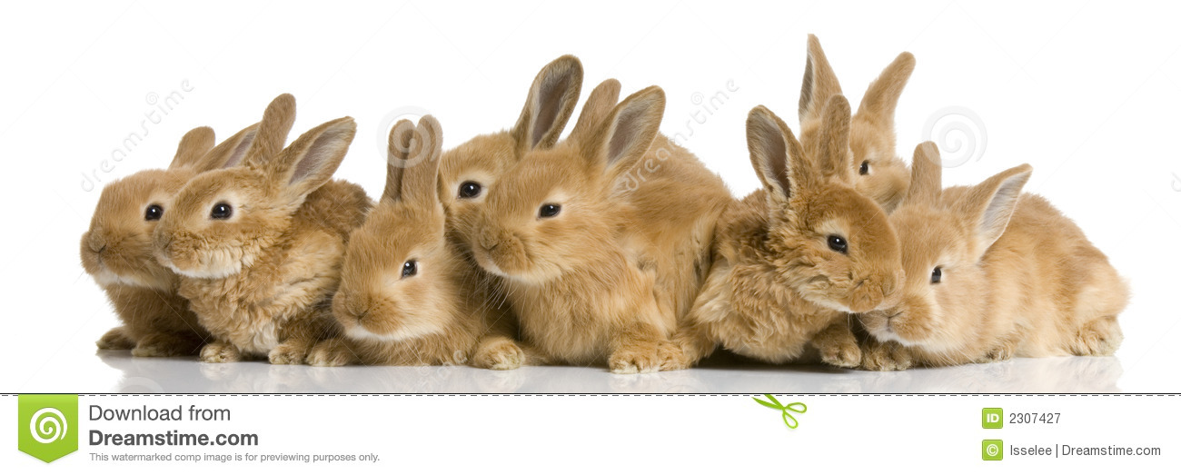 Group Of Bunnies 96