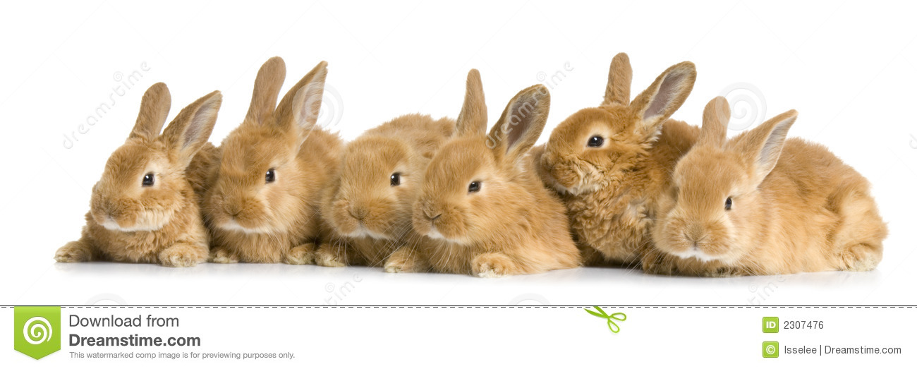 Group Of Rabbits 26
