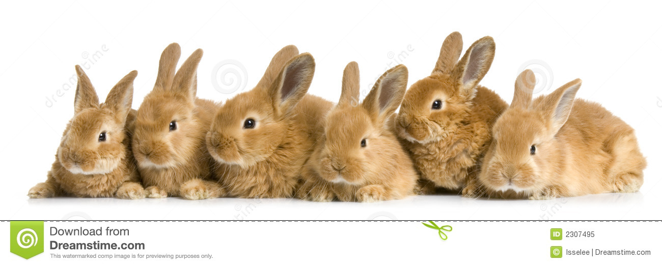 Group Of Bunnies 101