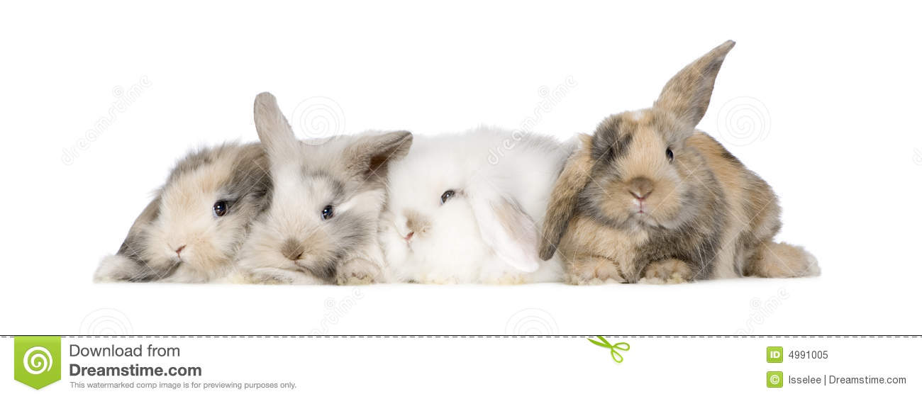 Group Of Bunnies 78