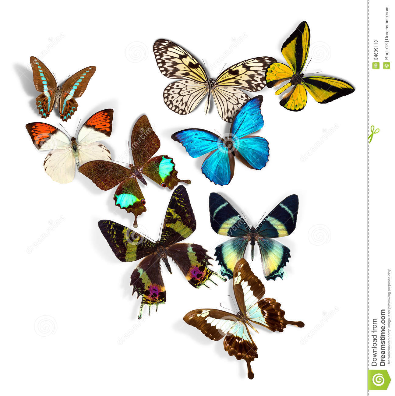 Group Of Butterflies 9