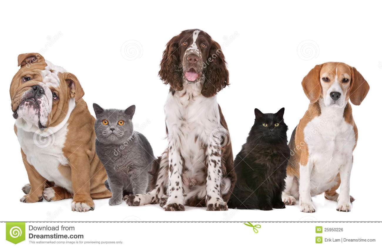 Group Of Cats And Dogs Stock Photo Image Of Feline Canine 25950226