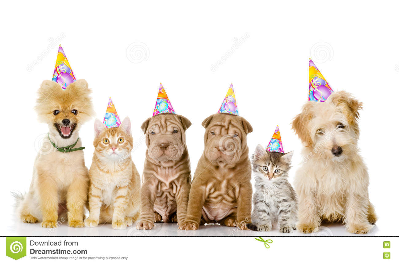 Group Of Cats And Dogs With Birthday Hats Isolated On White