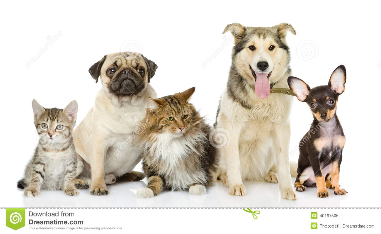 Group of dogs and cats - photo#22