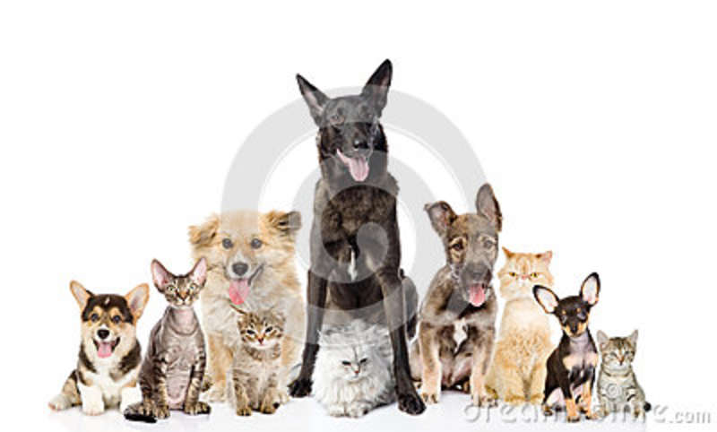 Group of cats and dogs in front. looking at camera