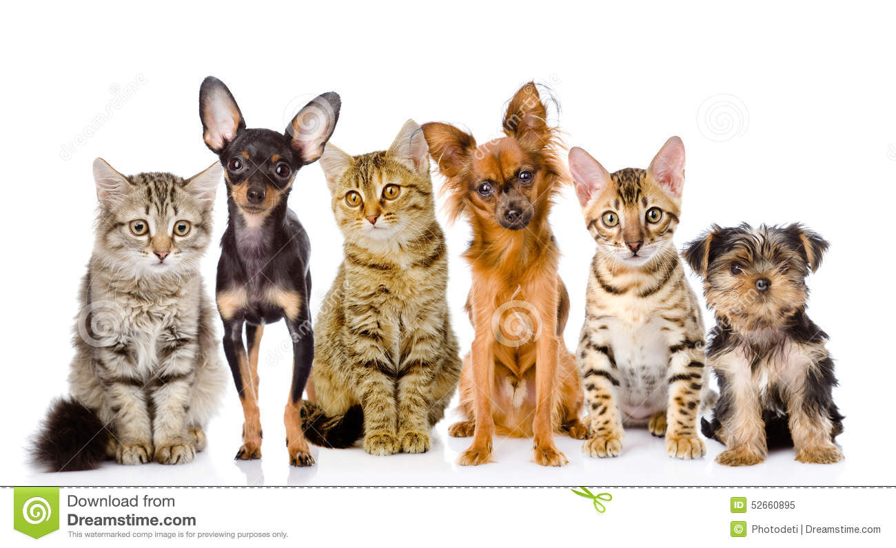 Group of dogs and cats - photo#21
