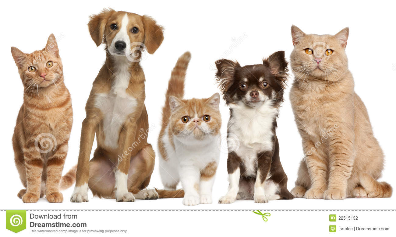 Group of dogs and cats - photo#8