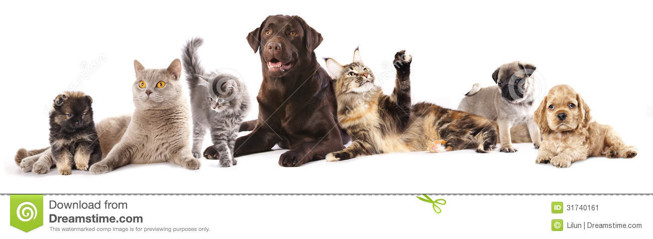 Group Of Cats And Dogs Stock Image  Image Of Horizontal