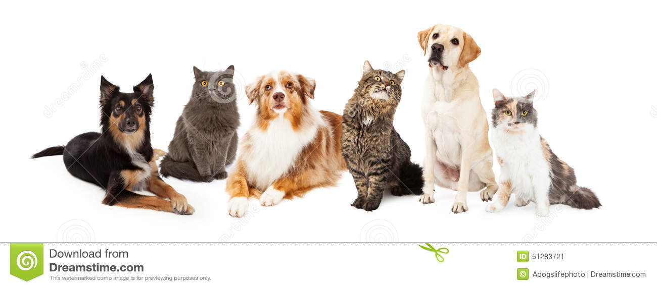 Group of dogs and cats - photo#15