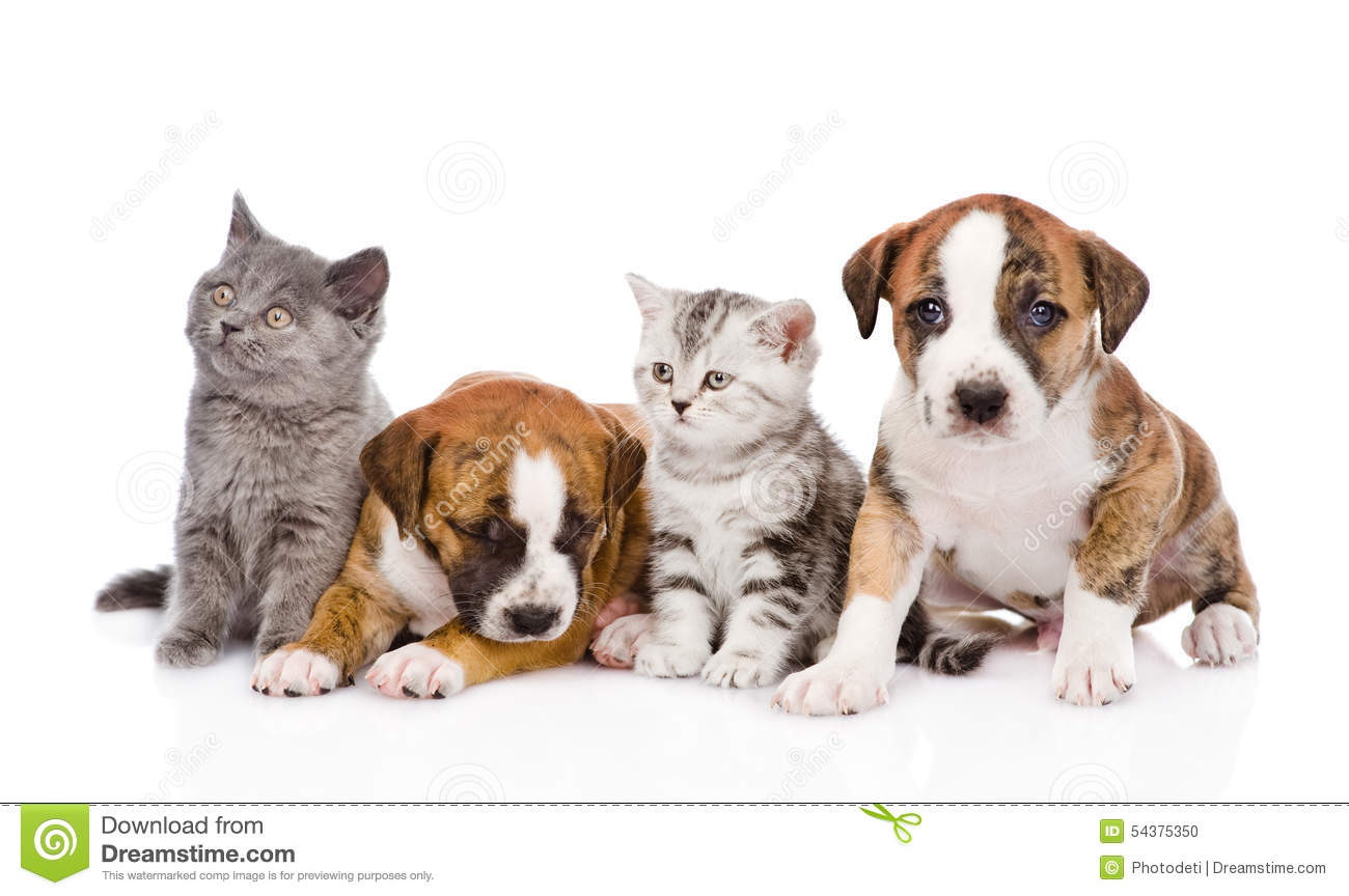 Group of cats and dogs sitting in front. on white