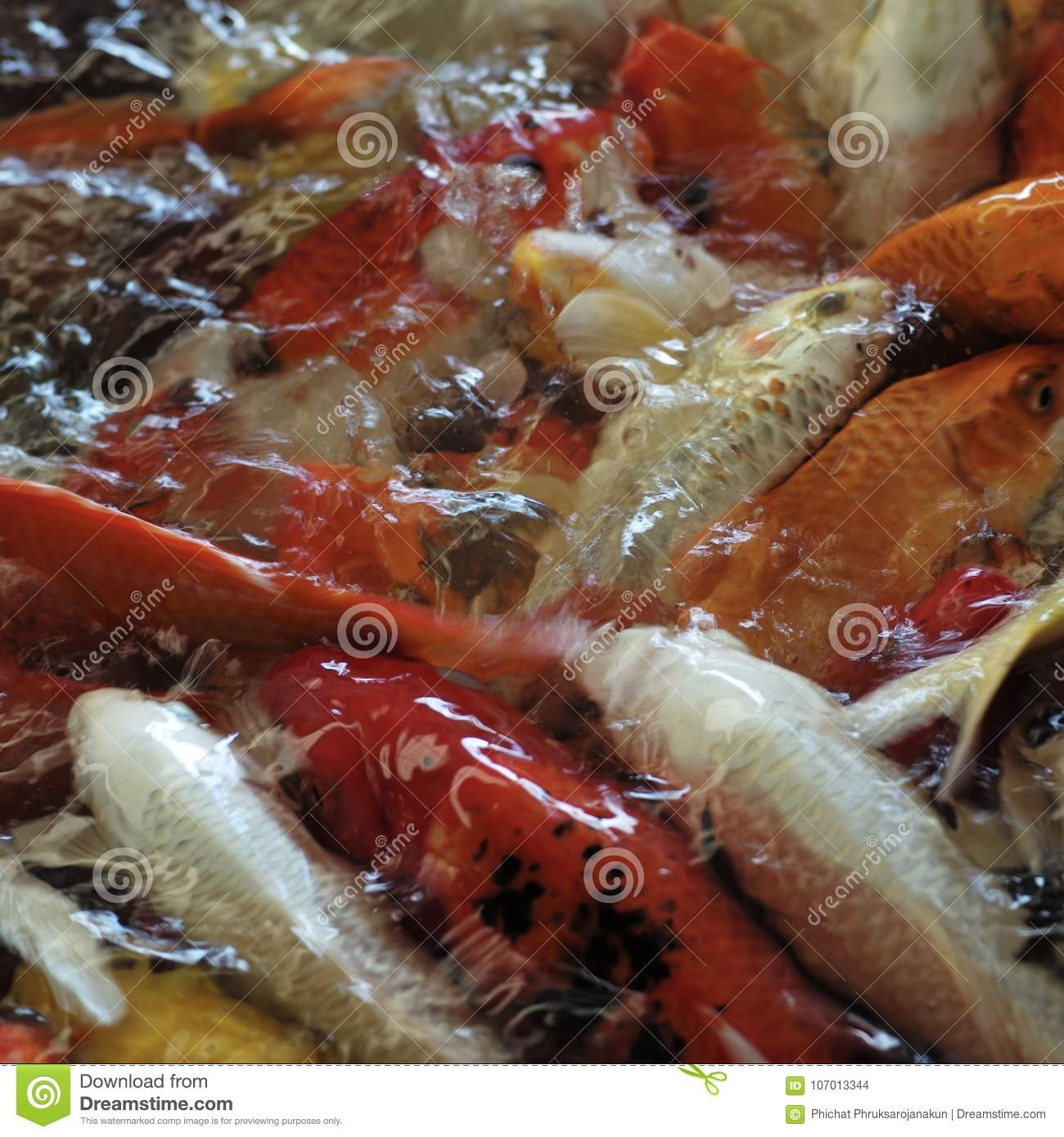 Group of colorful fish stock photo. Image of young, black - 107013344