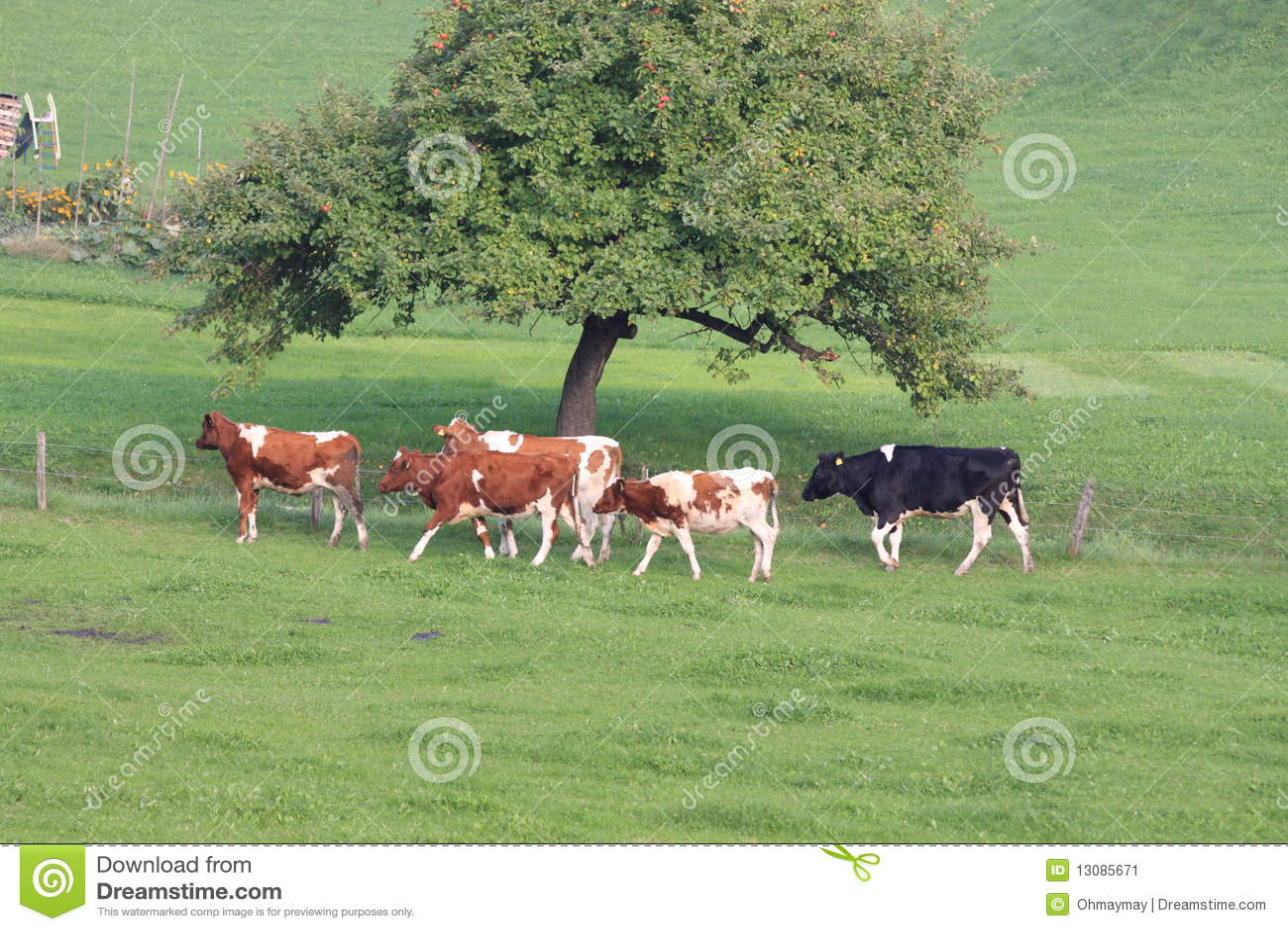 cow breeding business plan