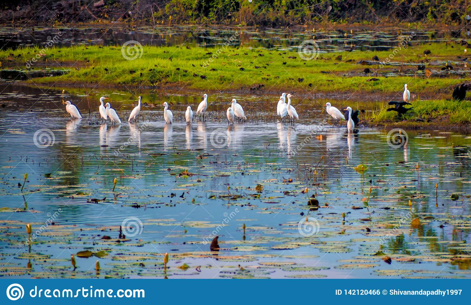 A group of cranes having quality time.