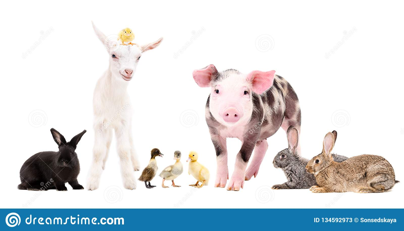 Group of cute farm animals standing together