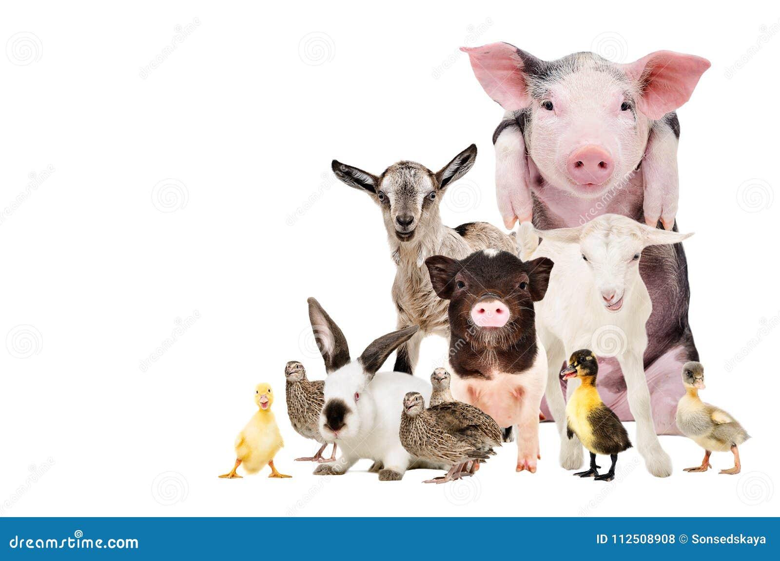Group of cute farm animals